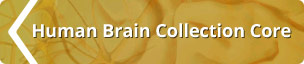 Human Brain Collection Core Logo